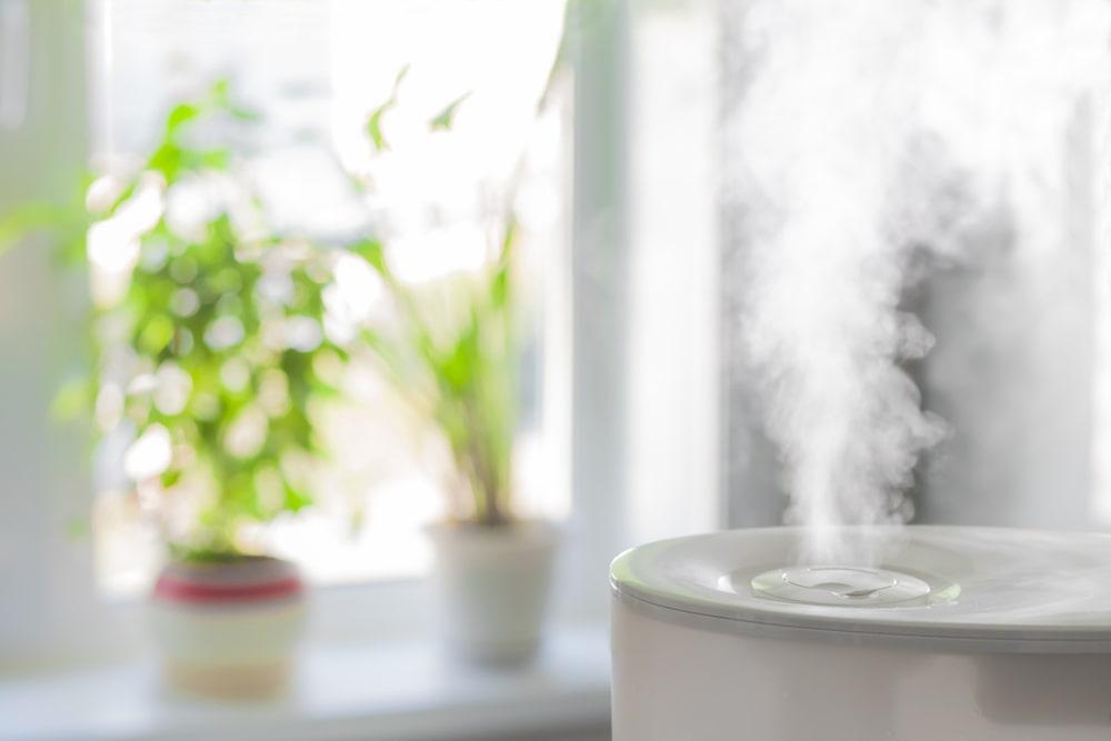 Wilgotnosc powietrza przy domowej uprawie roslin – o czym warto pamietac